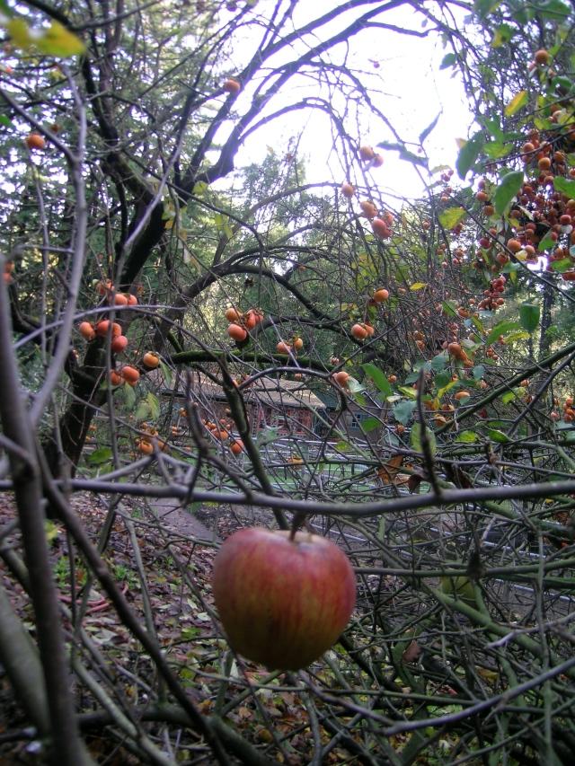 apples12:12