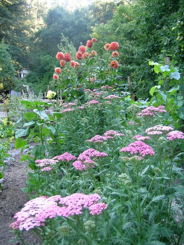 July 2011 flowers