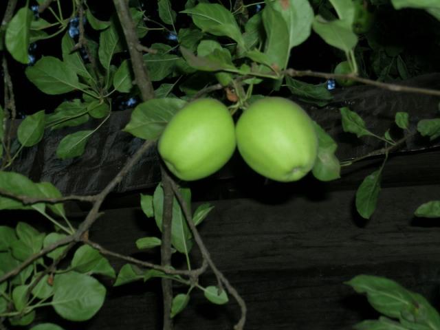 greenapples2