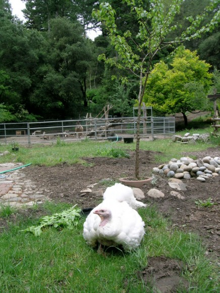 Ariala in 2011, still able to enjoy fresh grass despite her broken hip.