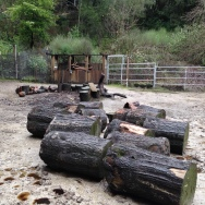 Back hurt for a week after rolling these wet logs into the corral.
